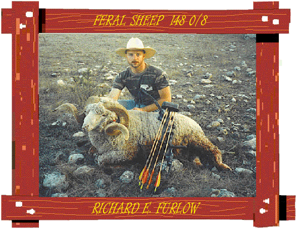 feral-sheep