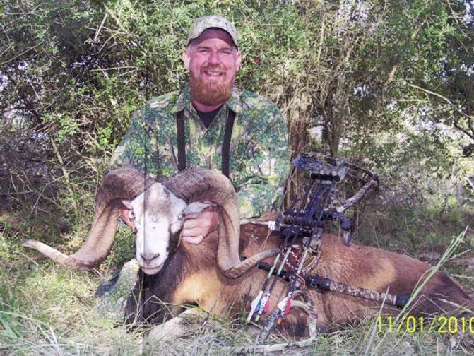 D. Stroup Corsican Sheep 135 4