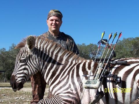 George zebra crop